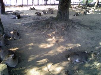 Nara1_081203