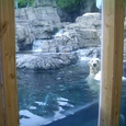 Central Park Zoo!